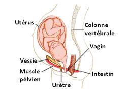 par ou les femmes urine t elle